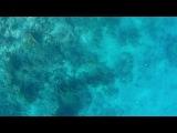 Красное море, Рас Мухамед. Ныряем: Женя, Макс, я-камера, где-то рядом Леха